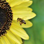 Zapraszamy pożyteczne owady do ogrodu