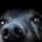 Kiedy stosować kołnierz ochronny dla psa