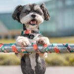 Dizajnerskie akcesoria dla psa. Zobacz, gdzie kupić!